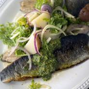 Seared Rainbow Trout + Citrus-fennel-potato salad + Cilantro pesto