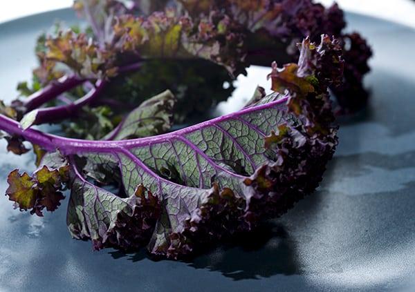 Kale and Lentil Salad with Honey- Mustard Vinaigrette_kale purple leaf