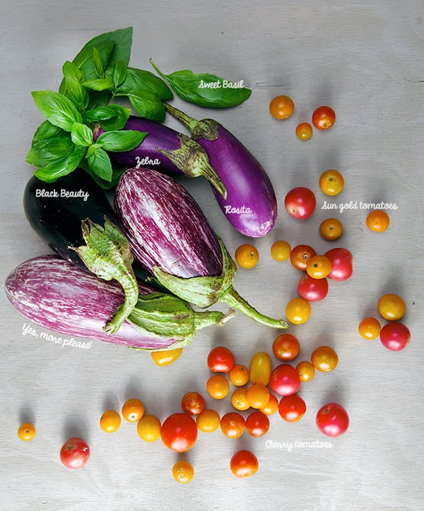 Eggplant-Parmiggiana_beauty-ingredients