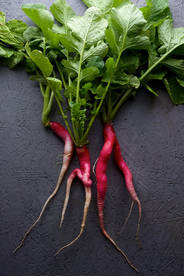 Candela-di-focuo-Radishes_harvest-2016_Yes,-more-please!