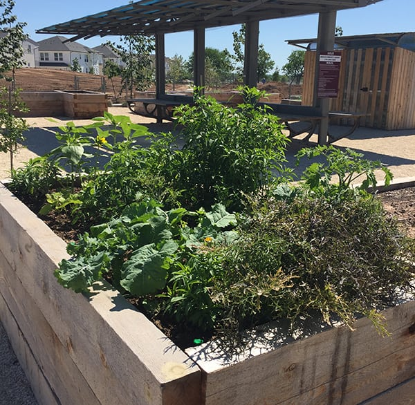 Mueller Community Gardens